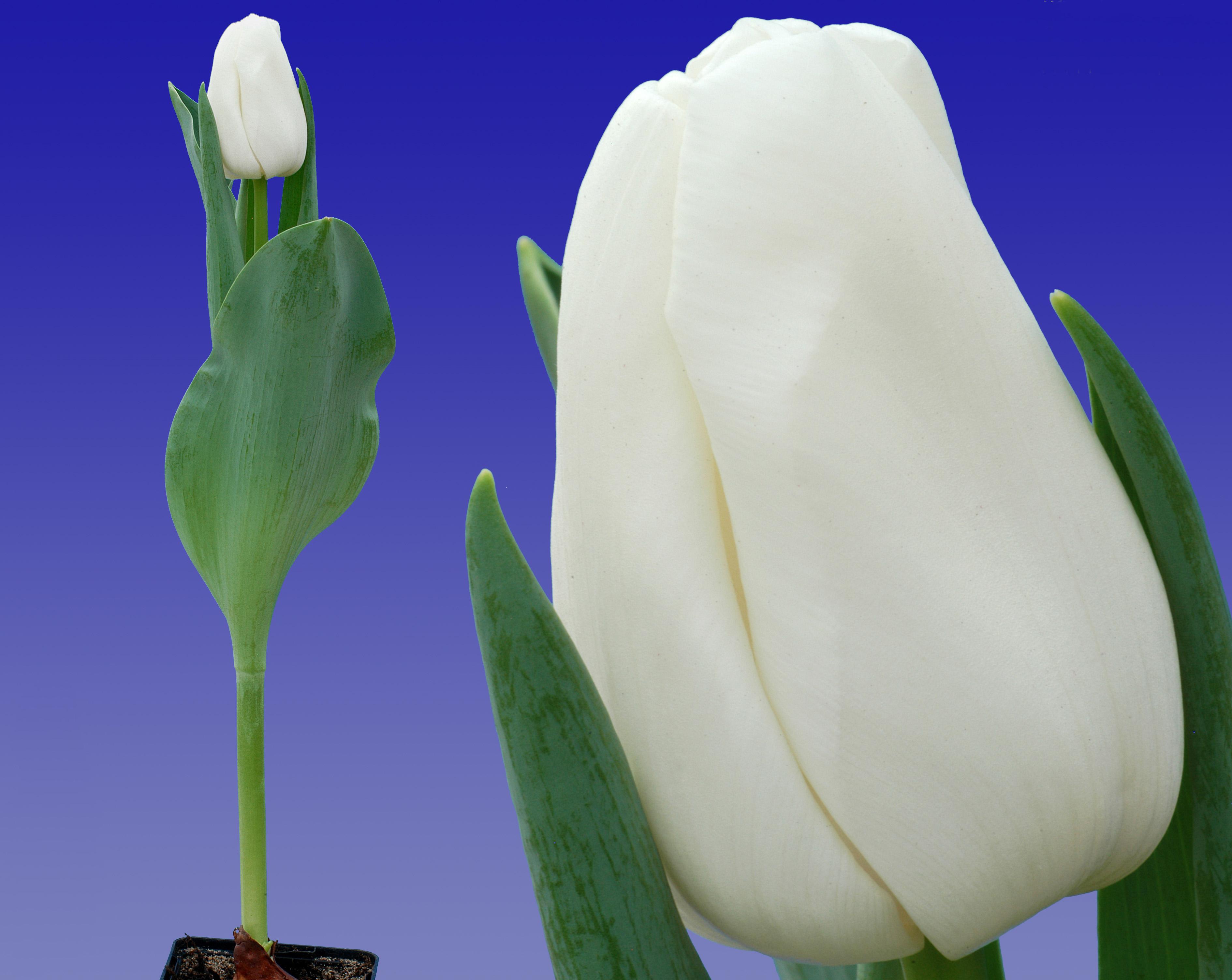10122363_Update_(combi_plant_en_bloem)